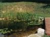 Naravno zarasel ribnik